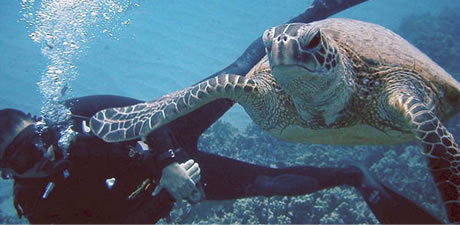 http://www.pacificislandscuba.com/wp-content/uploads/2014/02/tour_summary_img_undersea01.jpg